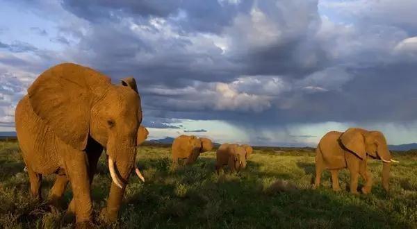【超值特价】坦桑尼亚Safari豪华之旅