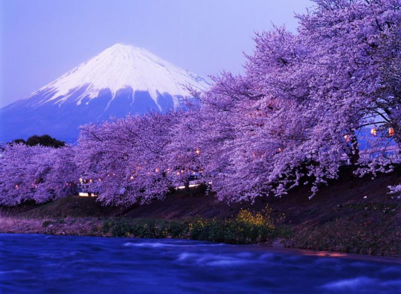 早樱季日本本州5+2半自助7天(东东)