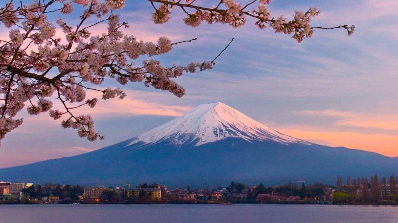 樱花季日本本州(6+1)半自助7天(阪东)