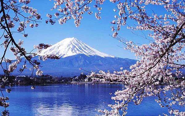 樱花季日本本州6+1半自助7天